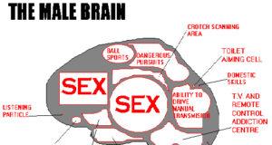 The male brain!