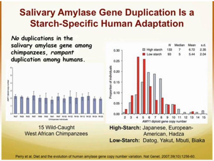 salivary amylase and starch