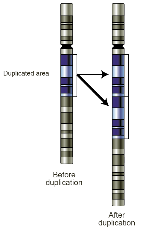Copy numbers, repeated segments of the same DNA